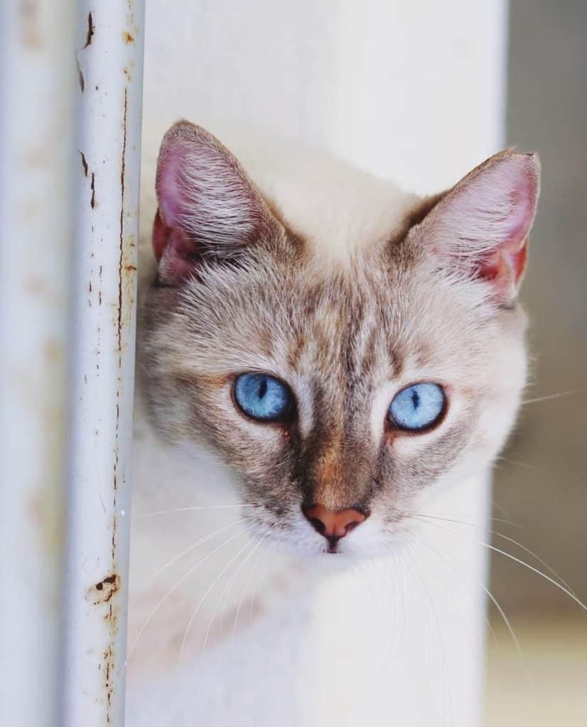 cat-sitting5