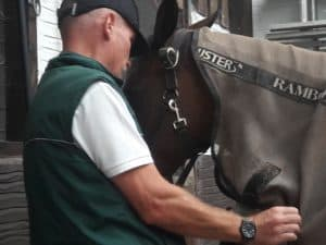 IDS Horse