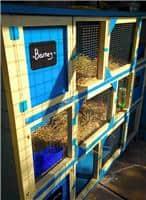 bunny-hotel-1jpg